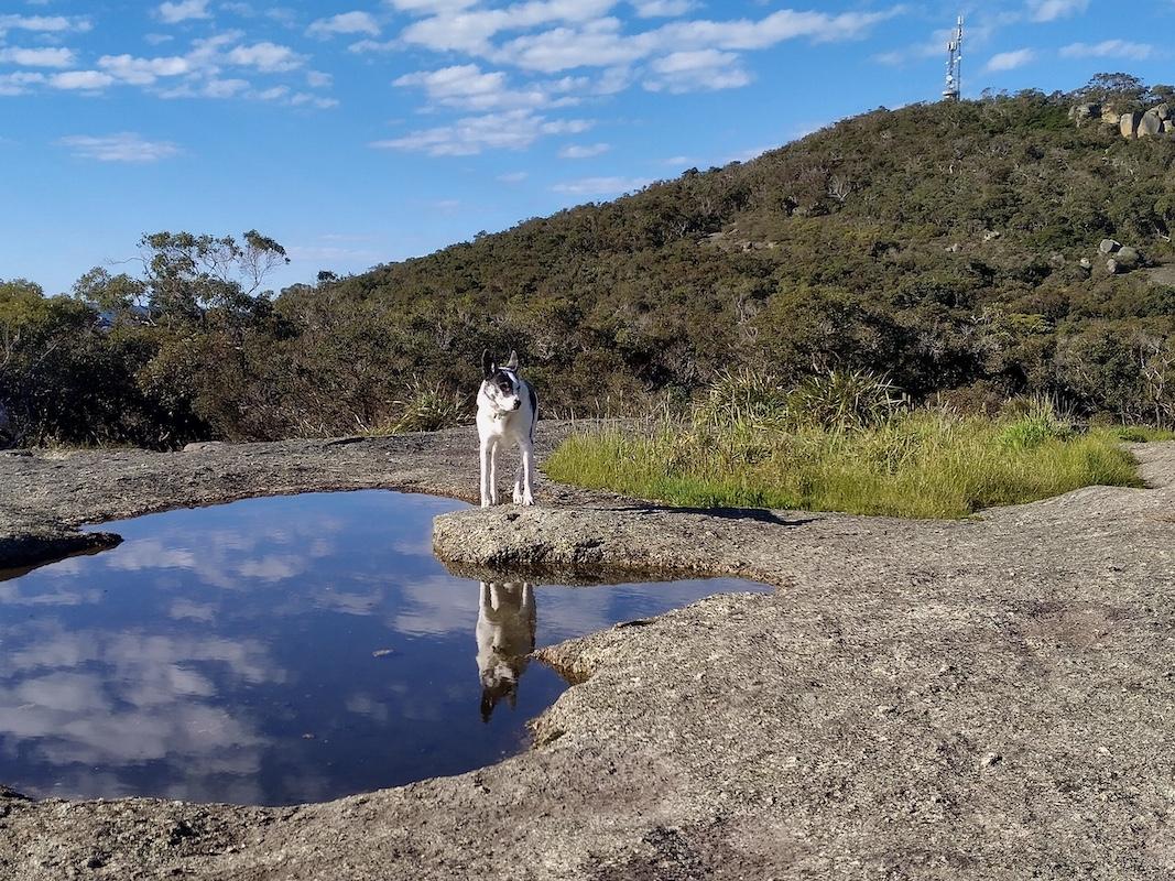 001  Wiilow reflecting 9.45am.jpeg