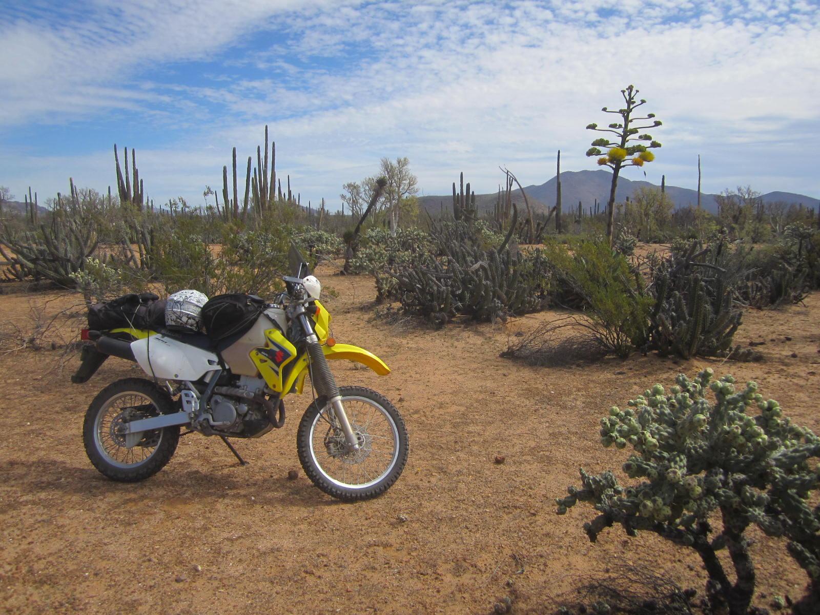 2015-03-07 Near Guerrero Negro (1).JPG
