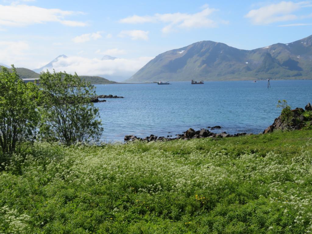 2019-06-17 Toften, Norway  & Myre2_1560783040969_4.JPG