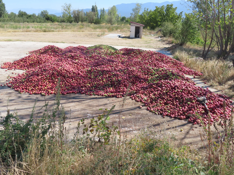 2021-10-03 Apple harvesting.jpg