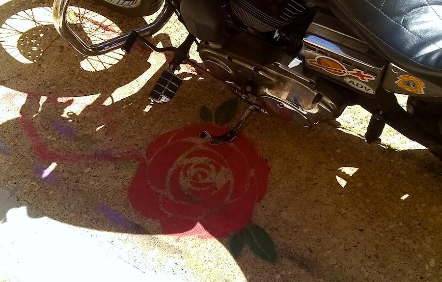 24 red rose.jpg