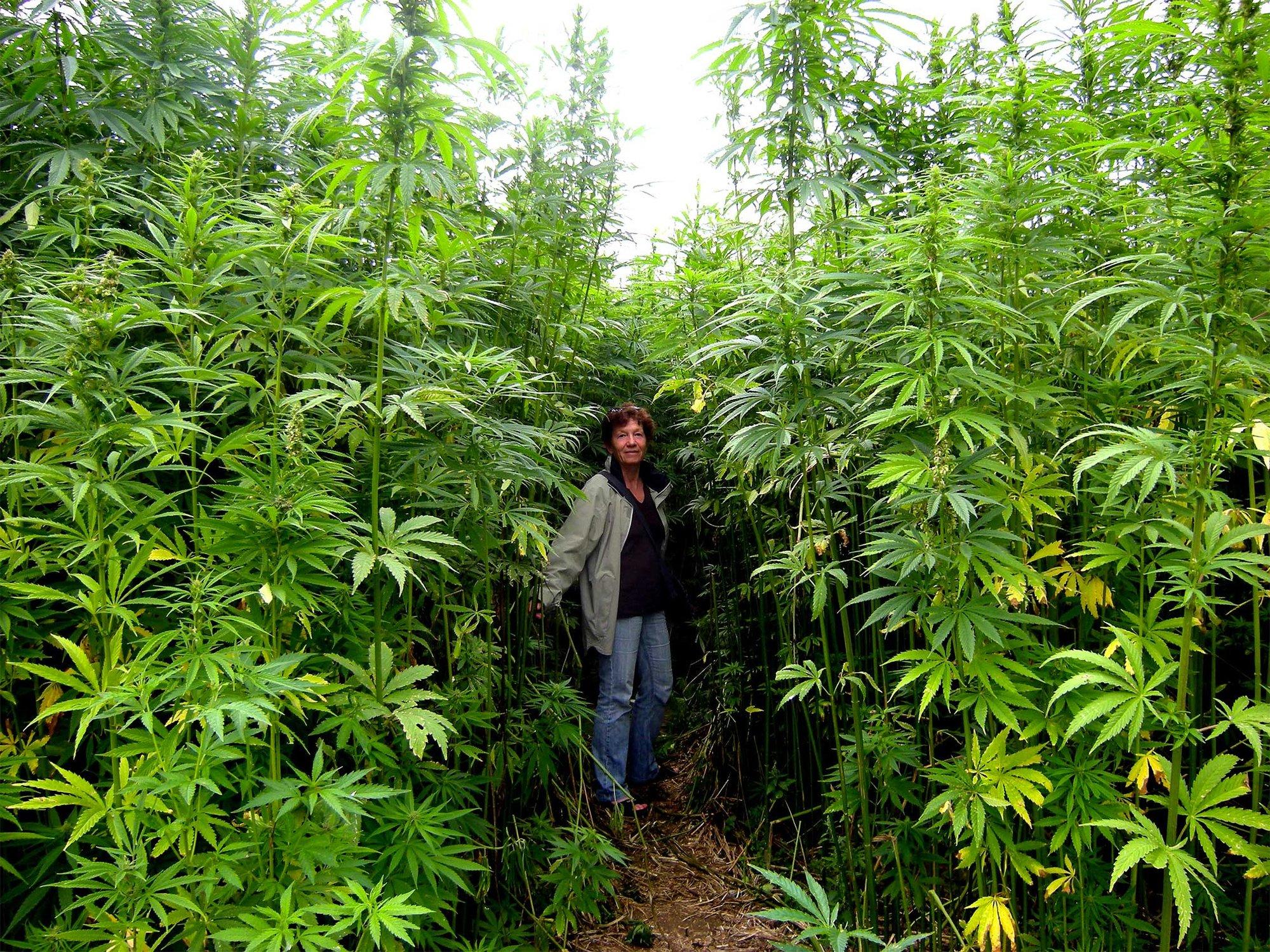 3-outdoor-cannabis-field-5.jpg