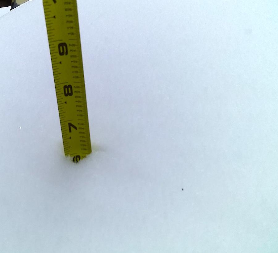 6 inches.jpg