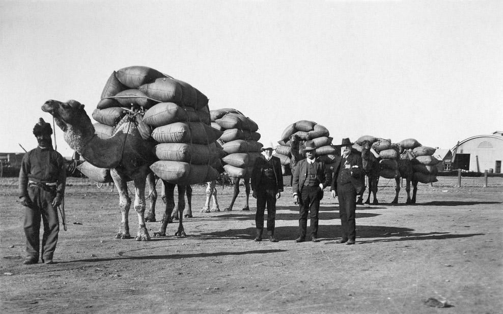 Afghan_camels_SLSA_B14808_edited.jpg