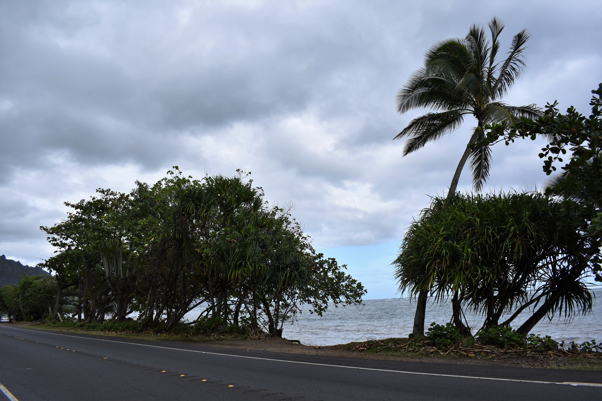 Beautiful Palm.JPG