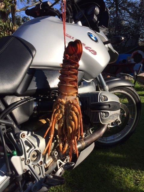 Bike & Crayfish.JPG