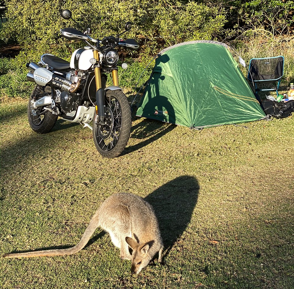 Bunya wallaby tent.jpg