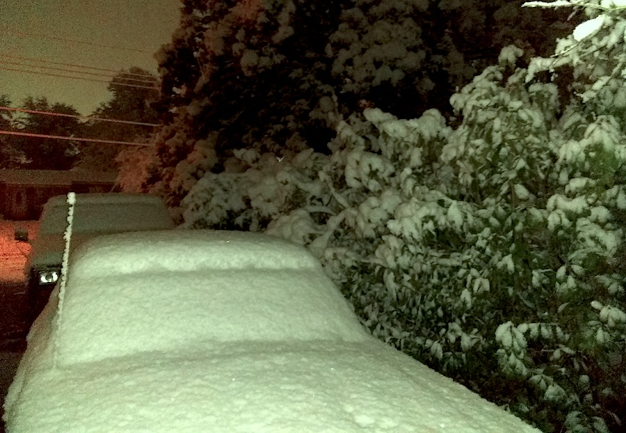 bushes snow.jpg