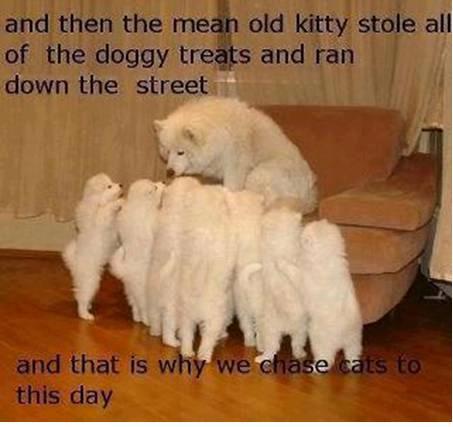 chasing-cats.jpg