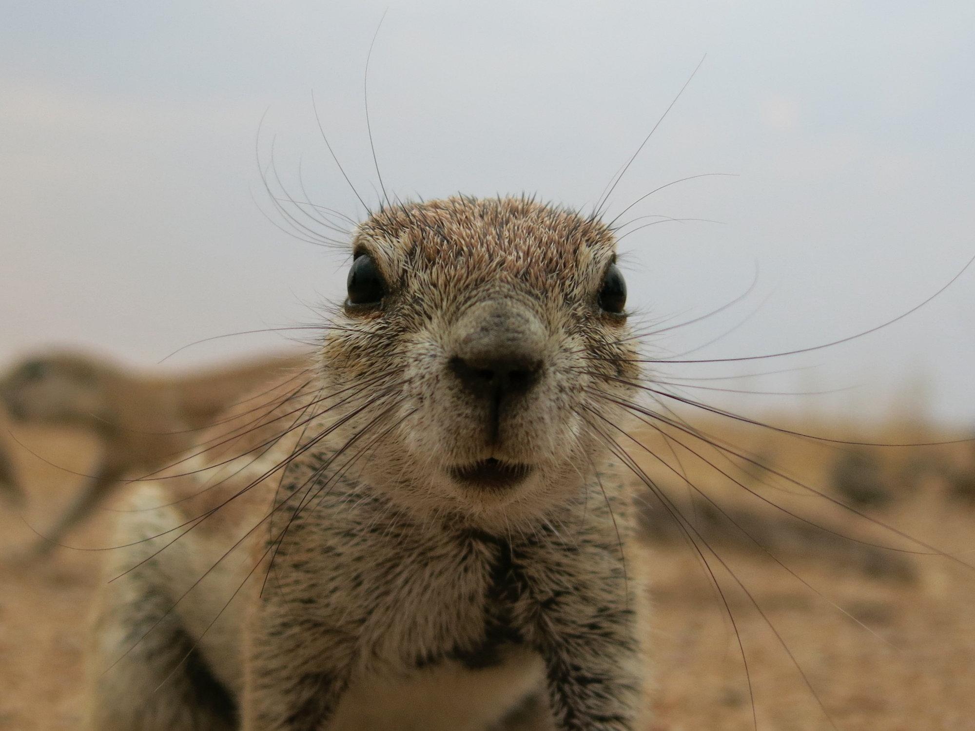 Critter in Namibia.jpg