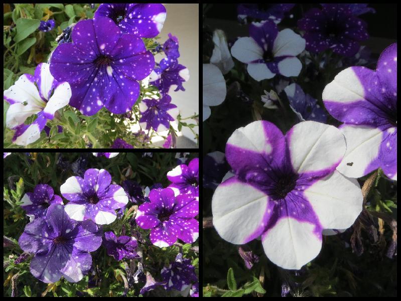 day_2_flowers.jpg