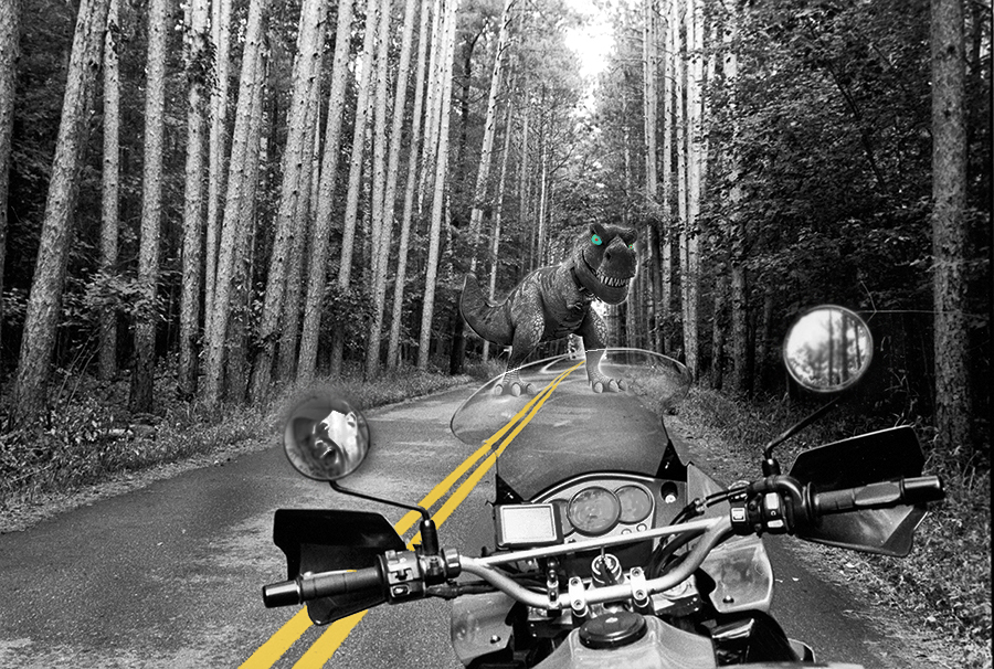 dino on the road-herm.jpg