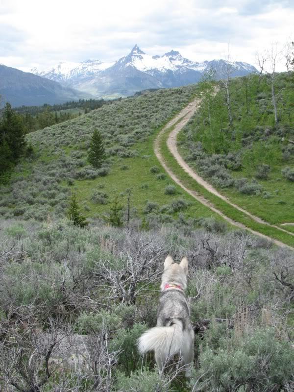 Dog in mountains 3.jpg