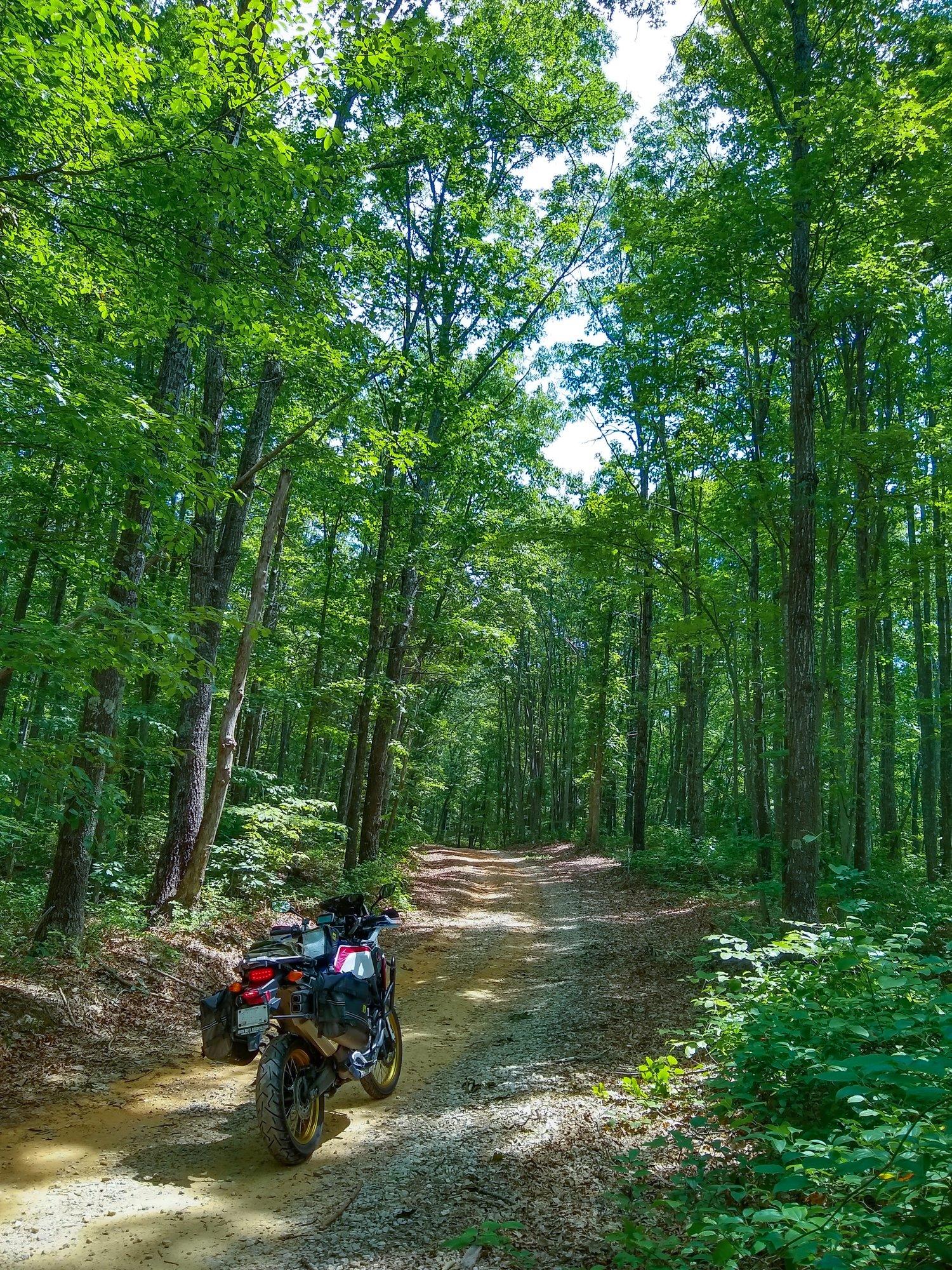 Franklin State Forest-sm.jpg