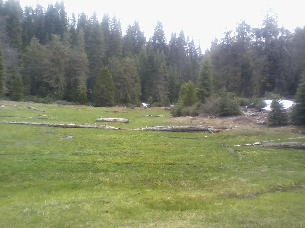 gaggs meadow.jpg