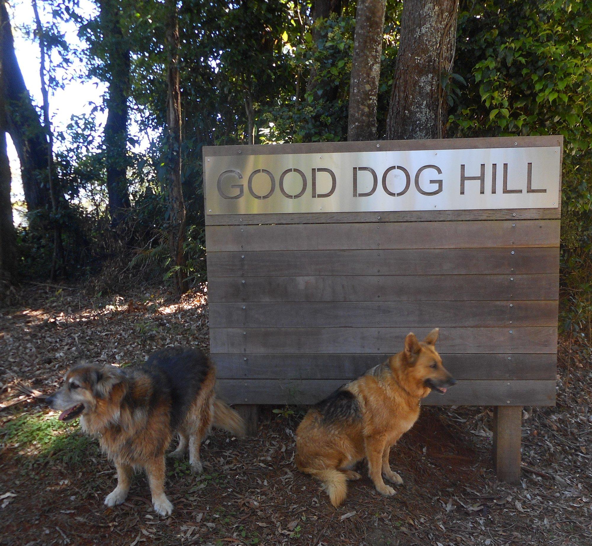 good dog hill (2).JPG