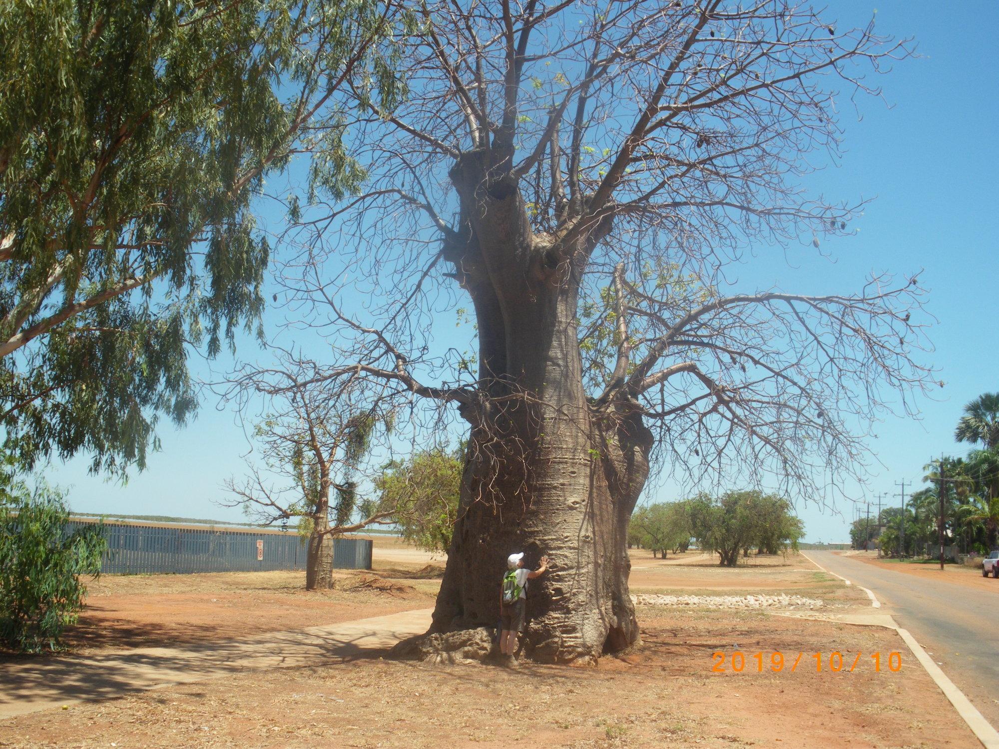 Holle Baobab.JPG