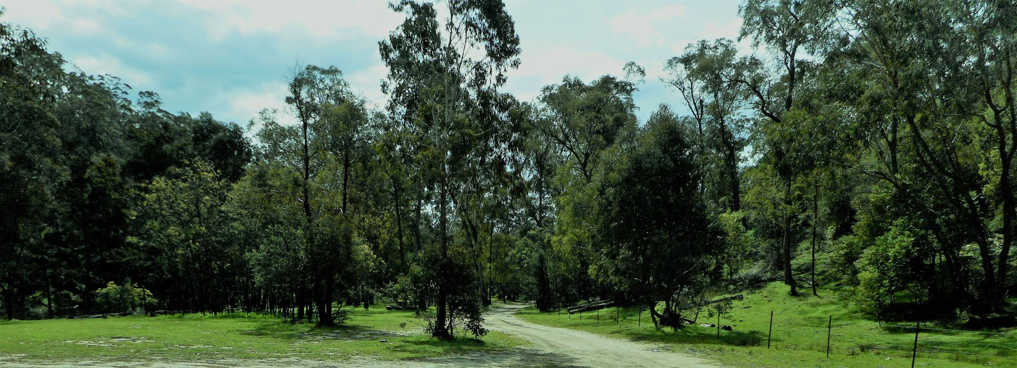 McIntyres grass.JPG