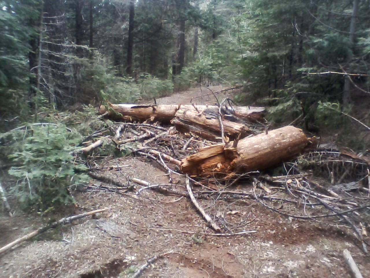 miami trail work.jpg