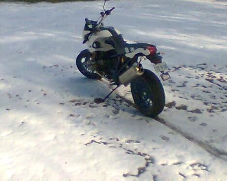 MM snow Honeysuckle (2).jpg