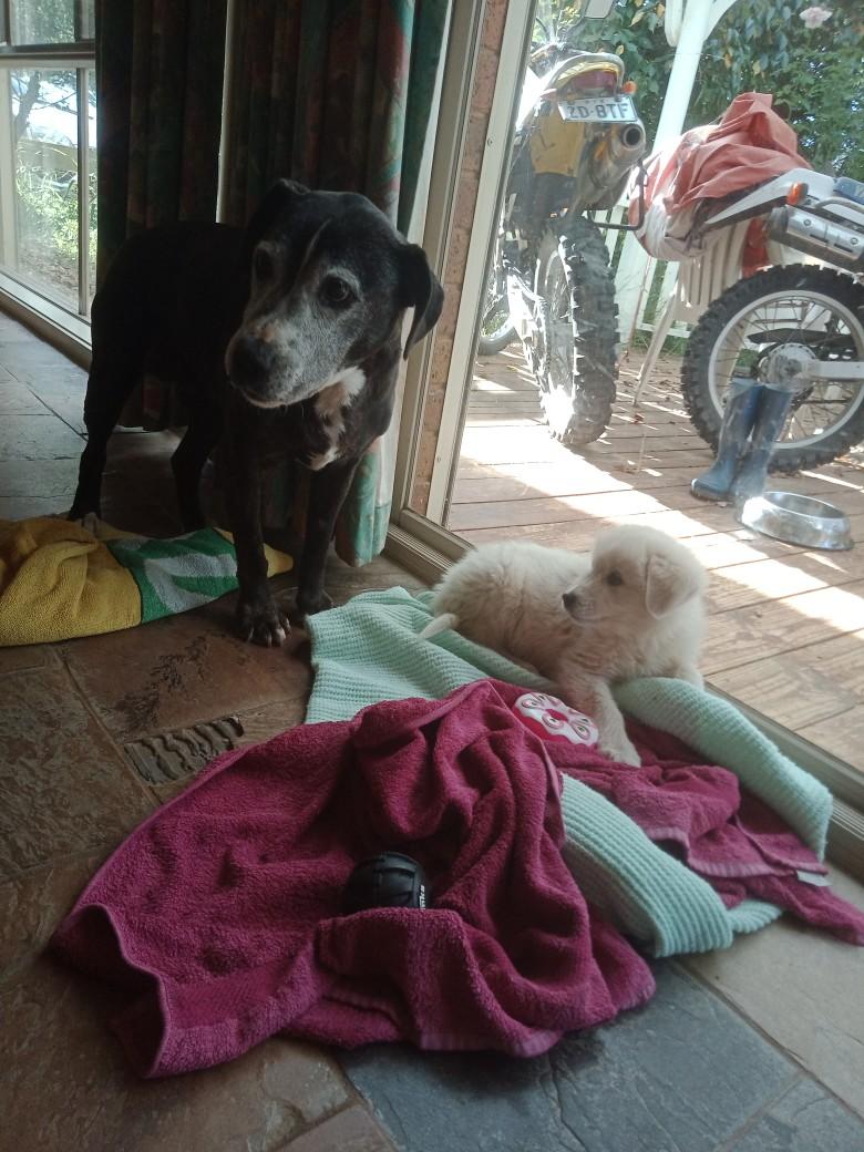Momo_puppy_with_Sammy.jpg