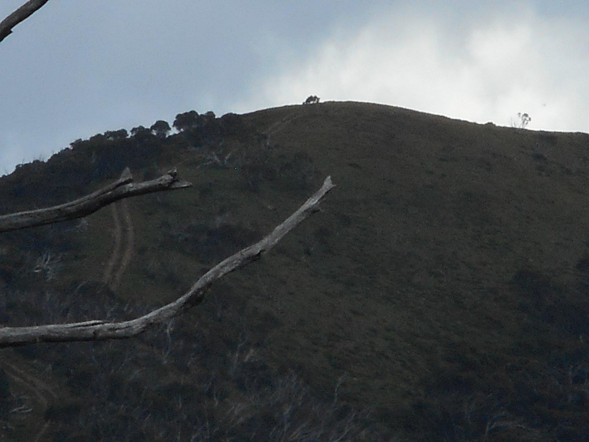 Mount Murray South.JPG