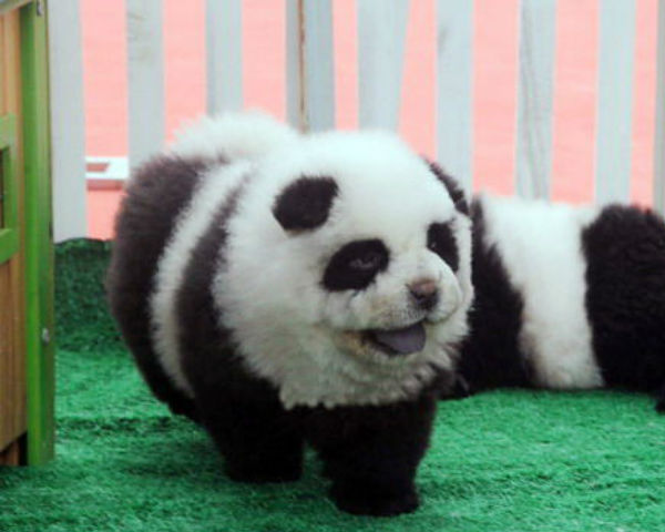 panda-dogs.jpg