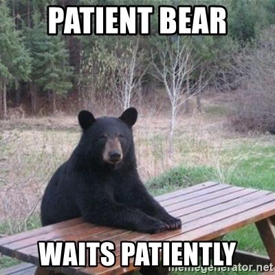 patient-bear-waits-patiently.jpg
