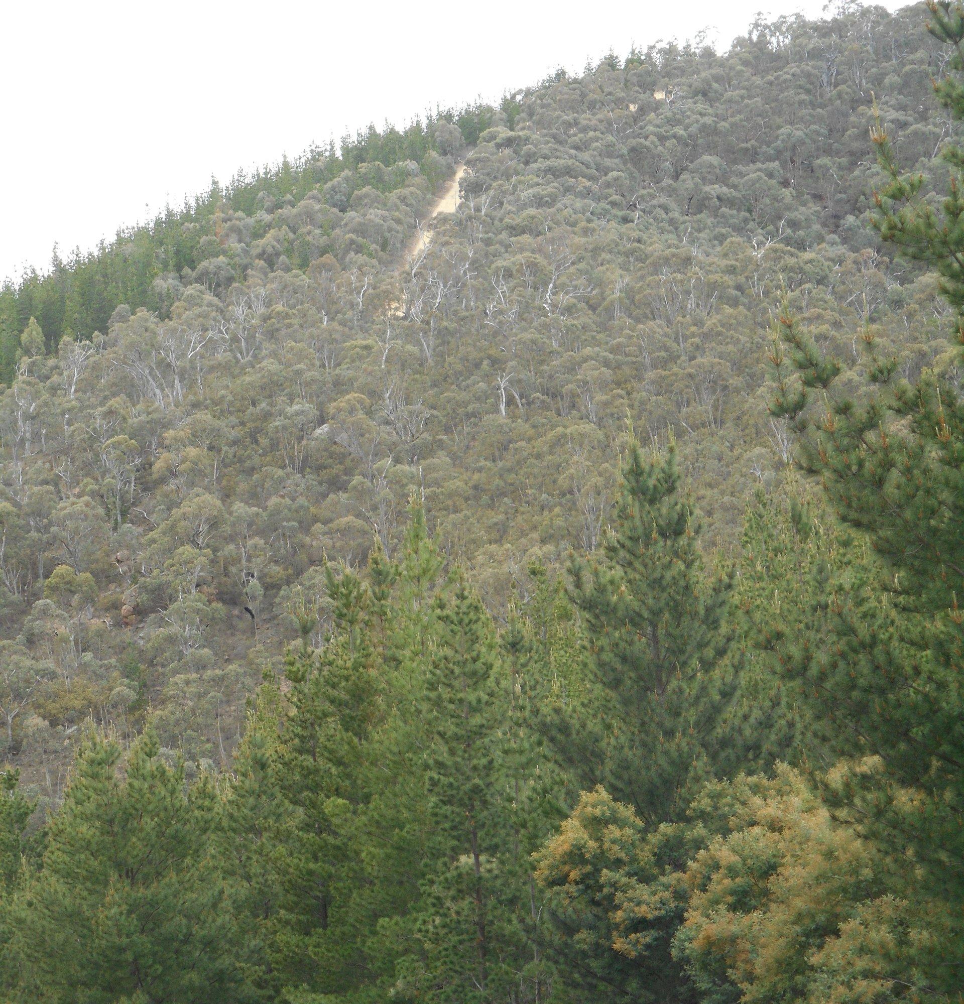 Same hill.JPG