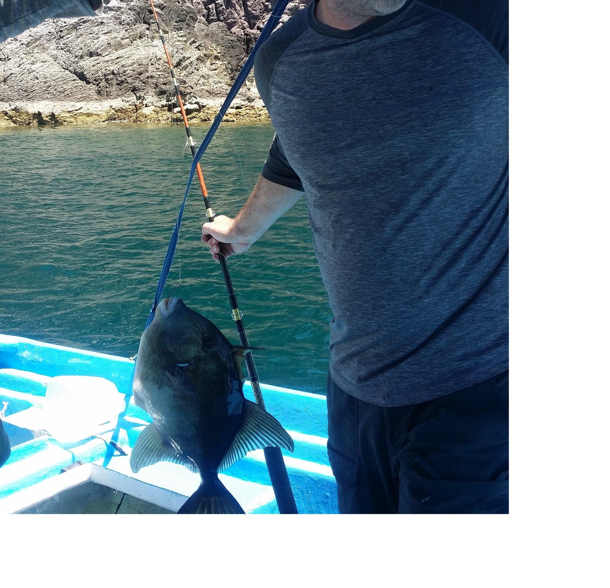 Sea Bass Edit.jpg