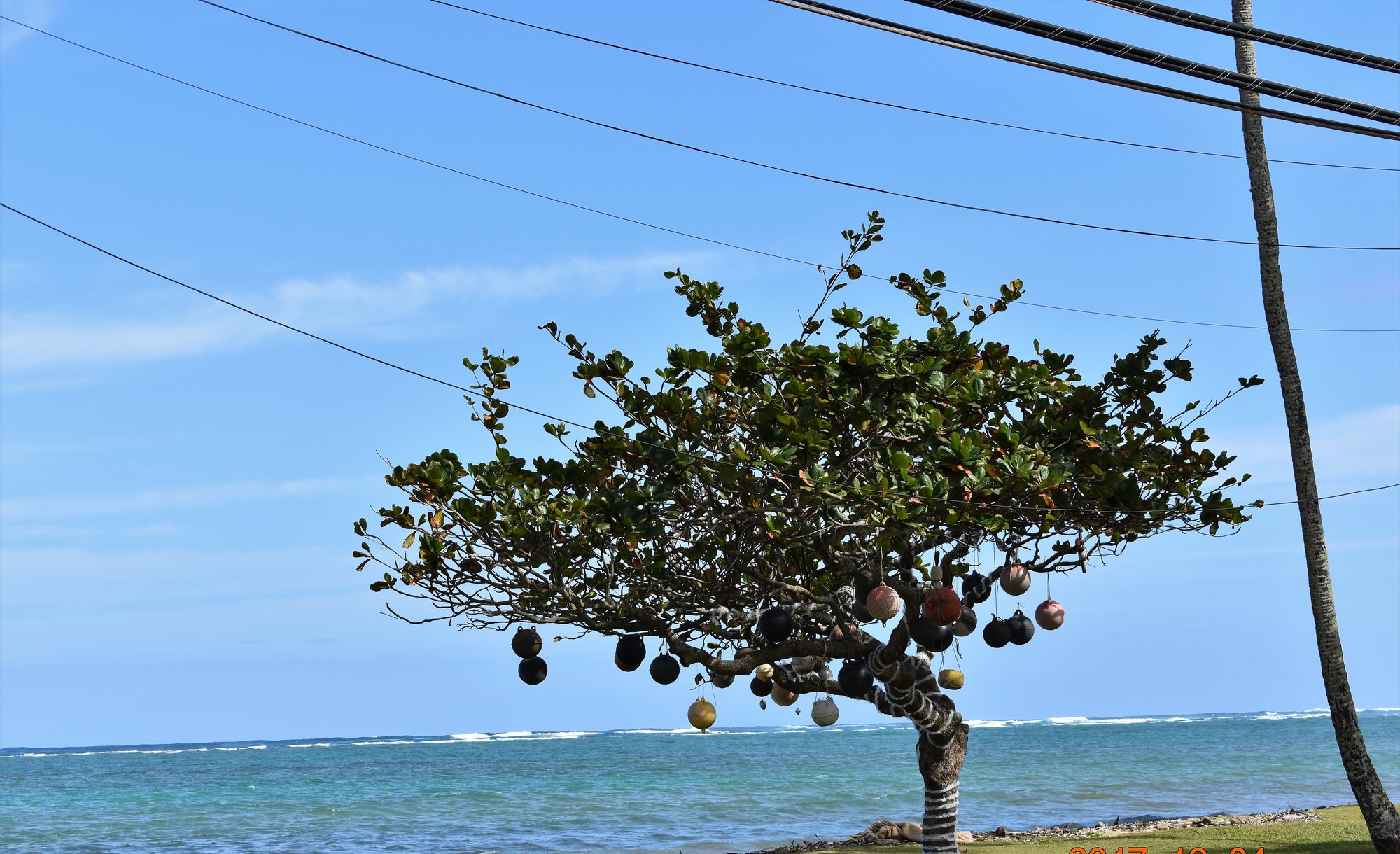 Tree of floats.jpg
