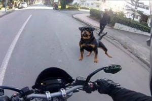 Loose dog